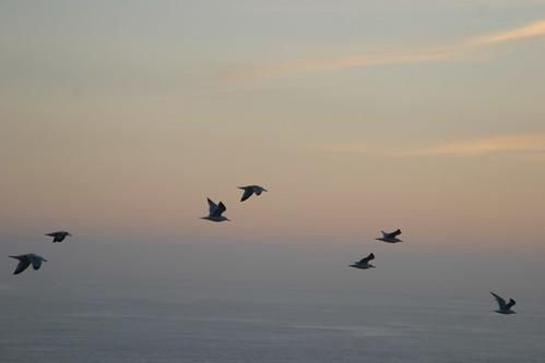 gulls at sunset