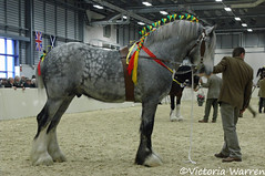 Deighton Silver Treasure (Vicktrr) Tags: show horse shire 2008 peterborough