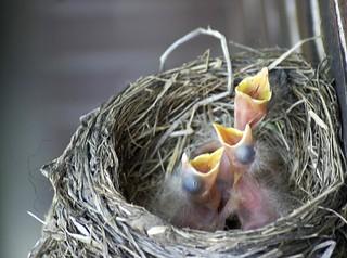 Robin Triplets