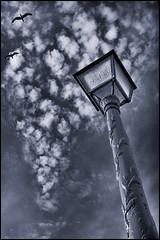 Gliding (Thomas Leth-Olsen) Tags: sky bw seagulls lamp flying cyantoner