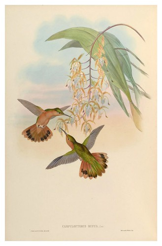 008-An introduction to the Trochilidae or family of humming-birds- Vol 2- 1861-John Gould