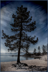 Lake Tahoe 5 (dwight g) Tags: shadow lake tree water canon harbor sand roots tahoe ps nik topaz 6d 24105