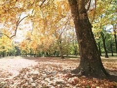 Margitsziget (red R) Tags: autumn fall hungary fallcolors budapest autumncolors foliage magyarorszg margitsziget sz szisznek