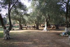 Corfu 2007 - #127