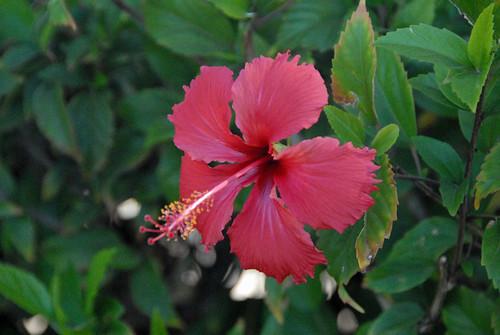 Maui 41