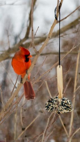 cardinal_etc-14.jpg
