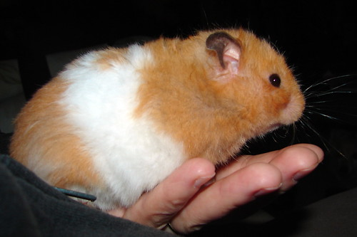 Big Fat Hamsters Big Fat Hamster
