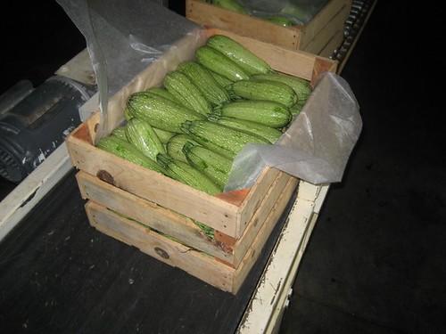 Calabaza fresca en caja de madera o plastico de exportacion