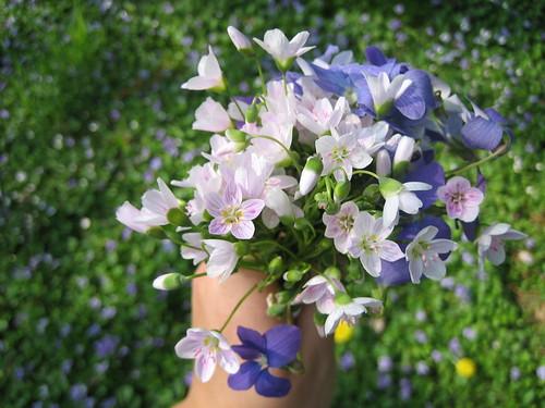 4.26.08 Flowers 010