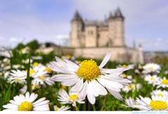 Spring (Hans van Reenen) Tags: france castle spring fav50 loire saumur fav100 fav200 aplusphoto infinest