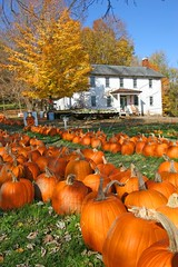 dupler pumpkin farm by natural born hikers (Cyd Read and Traci Pickering), on Flickr