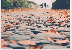 Clovelly Cobbles (Livesurfcams) Tags: film 35mm expired kodak nikon f4 devon clovelly cobbles