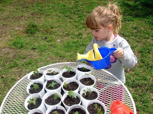 Tree Planting Pic 5