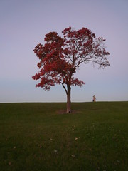 Autumn, Edgewater (rwchicago) Tags: autumn tree foliage hopperesque