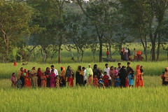 In the fields (BBC World Service Bangladesh Boat) Tags: water river bbc rivers bangladesh climatechange bbcworldservice pothe bhola sanglap bangladeshbytheriver nodi bangladesh mv aboshar bbc sanglap ilisha ghat