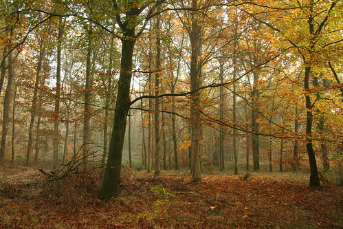 Savernake Forest 39
