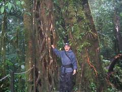 Monteverde - 11