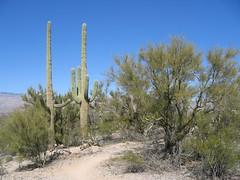 IMG_1987 (jrdnz) Tags: arizona tucson saguaronationalpark