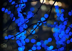 balm (futureancient) Tags: blue trees colors night dark 50mm colorful bokeh rangefinder f10 noctilux colourful deepblue leicam8 futureancient