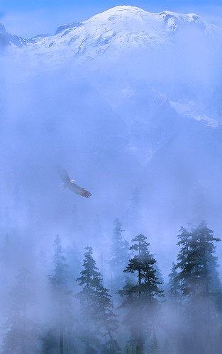 Eagle Mountain Mist