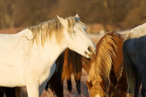 Feeding Horses 153