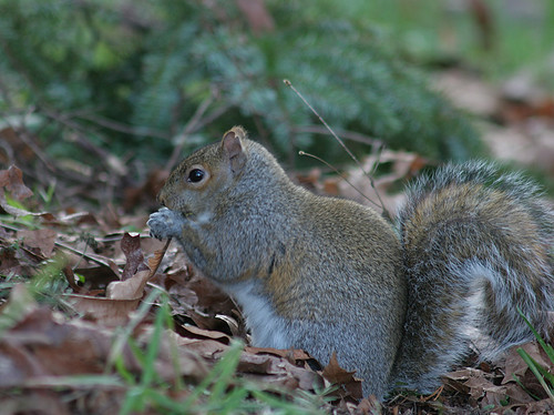 Frisky squirrel