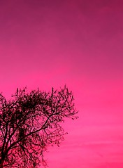 Cherish the pink sky (Darwin Bell) Tags: birthday pink sky tree silhouette branch 50faves 25faves cherishlovespink anawesomeshot aplusphoto excellentphotographerawards
