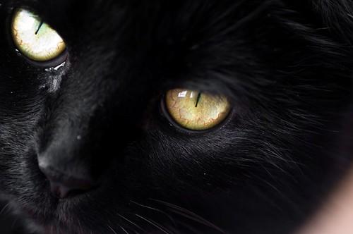 Sams eyes 1