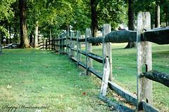Escape (HappyHorizons) Tags: usa green fence escape indiana bloomington happyhorizons