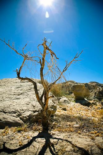 Desert south of Joshua Tree