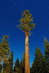 An Ancient Incense Cedar Tree Under Moonlight (Fort Photo) Tags: ca longexposure tree nature night stars landscape nikon nightscape nocturnal searchthebest laketahoe moonlit moonlight eyecandy afterdark startrails d300 naturesfinest incensecedar abigfave libocedrusdecurrens