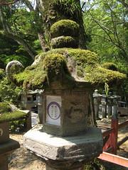 lantern, Kasuga-Taisha Shrine