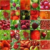 red + green fruits / vegetables by Veri's kleiner Winkel