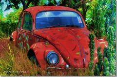 The Sleeping Beetle (Shabbir Ferdous) Tags: photographer beetle bangladesh hdr dinajpur bangladeshi canonef50mmf18ii abigfave canoneosrebelxti shabbirferdous wwwshabbirferdouscom shabbirferdouscom