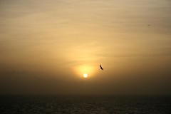 Good morning!!! (jmven) Tags: sea sky sun bird yellow sunrise canon island rebel venezuela margarita isla mosquera xti