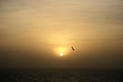 Good morning!!! (jmven) Tags: sea sky sun bird yellow sunrise canon island rebel venezuela margarita isla mosquera xti