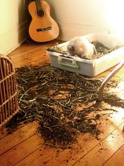 plato & the hay
