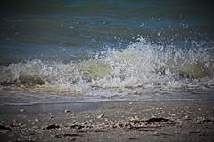 Winter Waves (Michiale Schneider) Tags: nature landscape seashell shore coastal florida sanibelisland bowmansbeach michialeschneiderphotography