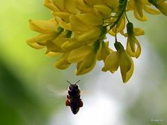 nature (Jeanne Kliemesch) Tags: flowers tree nature insect nikon explore jeanne theunforgettablepictures nikoncoolpixp80 nikonp80 vanagram vosplusbellesphotos