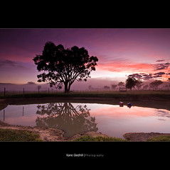 Dream as if you'll live forever. Live as if you'll die today. ([ Kane ]) Tags: morning sky tree water grass fog clouds rural dawn james pond farm dean australia explore nsw qld queensland kane gledhill kanegledhill obramaestra kunstgriffskunstgriffe kanegledhillphotography