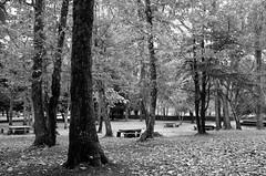 San Leonardo (CarloAlessioCozzolino) Tags: sardegna wood autumn leaves foglie sardinia autunno breathtaking bosco sottobosco sanleonardo silences silenzi the4elements santulussurgiu apotropaico montiferru pdc20080117