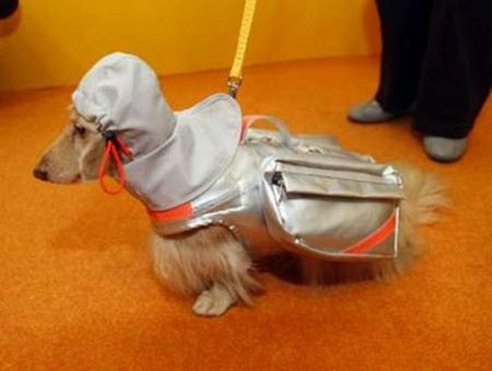 dog-earthquake-jacket