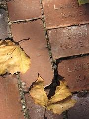 fall in lawrence, november 07
