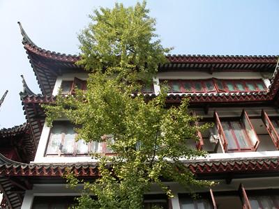 Shanghai VII