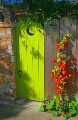 The Green Gate 1 6924 (casch52) Tags: green gate bouganvillea red brick carmel california fence moon crescent entrance latch lime limegreen abigfave ivy vine explorer235 topv333 door bricks sidewalk monterrey seenonflickr familygetty canon 20d photo photograph