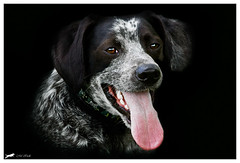 He he he (Marimo77) Tags: dog alex dark hund frame mywinners aplusphoto