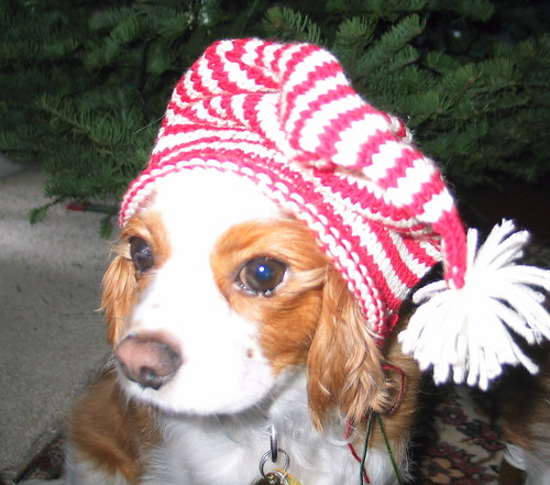 Puddles Candy Cane Hat