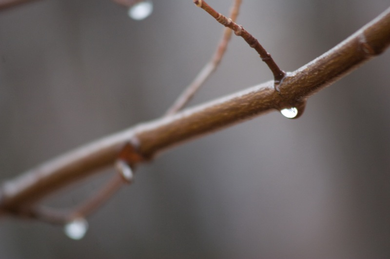 Crying Branch
