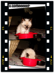 Es hora de comer!!!!!! (aunqtunolosepas) Tags: red pet cats baby pets cute animal animals cat yummy rojo kitten felin