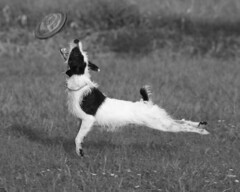 Glide (Emery_Way) Tags: dogs jack flickr russel award best terrier thelittledoglaughed anawesomeshot theperfectphotographer